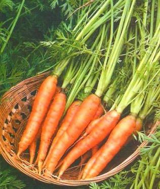 Types of vegetables vegetable types vegetable variety