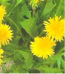 Edible Flowers List, Vegetable List and Healthy Vegetables