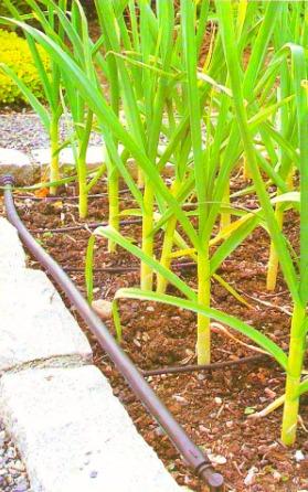 Garden Beat Inspiration Gallery Irrigationgarden