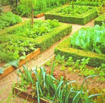 Vegetable Garden Layout and Vegetable Garden Designs
